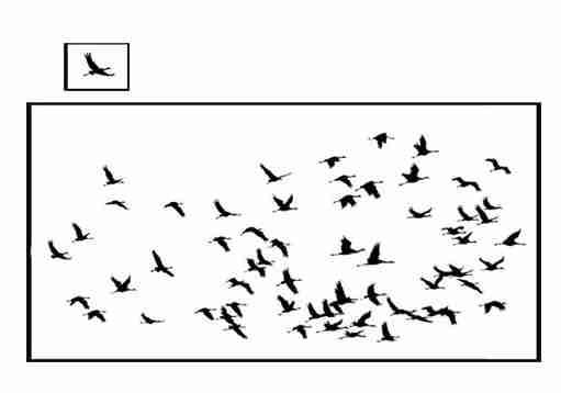 трафарет многоразовый птицы